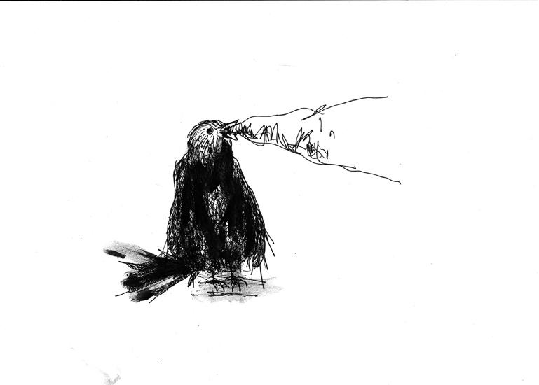 http://julienserve.com/files/gimgs/61_ofr-oiseau-11.jpg