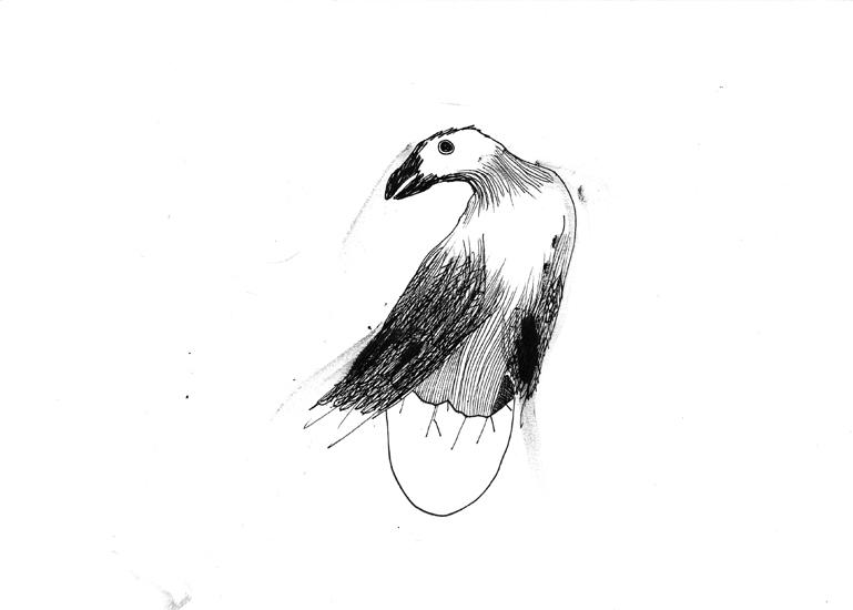 http://julienserve.com/files/gimgs/61_ofr-oiseau-13.jpg