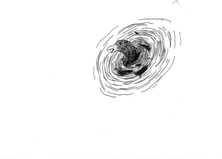 http://julienserve.com/files/gimgs/61_ofr-oiseau-21.jpg