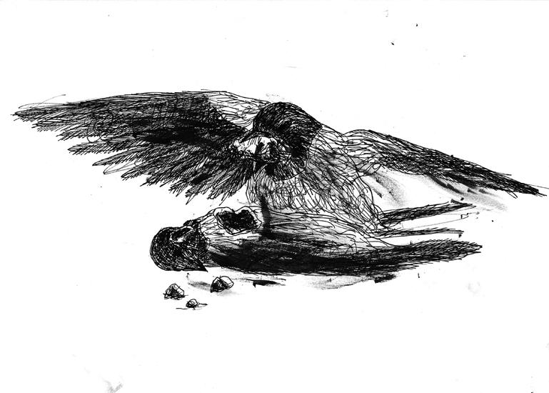 http://julienserve.com/files/gimgs/61_ofr-oiseau-26.jpg