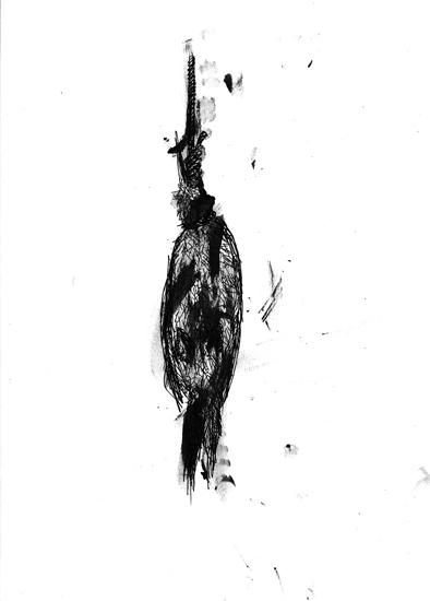 http://julienserve.com/files/gimgs/61_ofr-oiseau-48.jpg