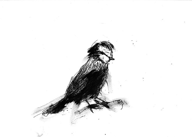 http://julienserve.com/files/gimgs/61_ofr-oiseau-49.jpg
