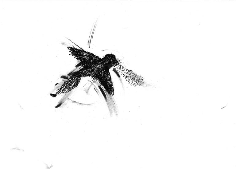 http://julienserve.com/files/gimgs/61_ofr-oiseau-50.jpg