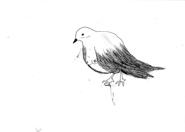 http://julienserve.com/files/gimgs/61_ofr-oiseau-53.jpg