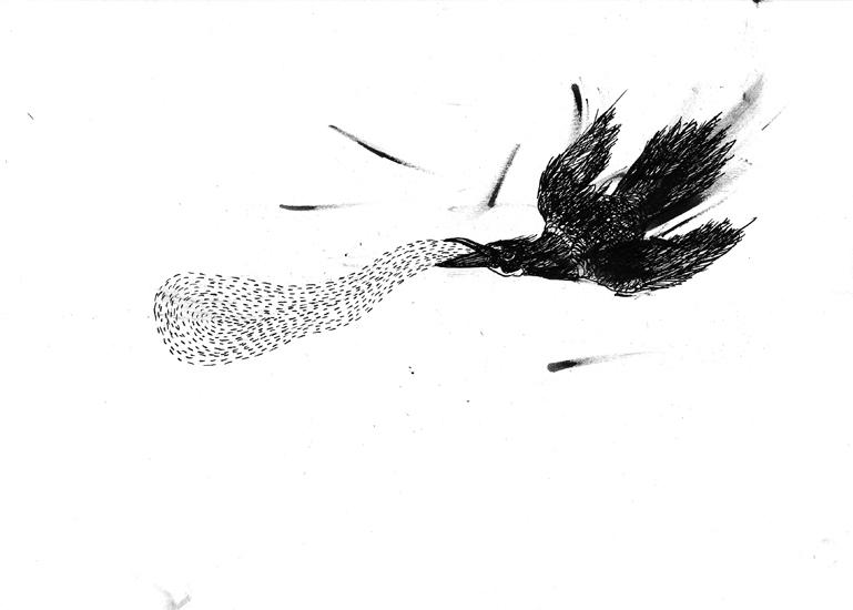 http://julienserve.com/files/gimgs/61_ofr-oiseau-54.jpg