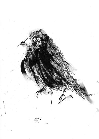 http://julienserve.com/files/gimgs/61_ofr-oiseau-56.jpg