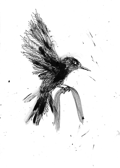 http://julienserve.com/files/gimgs/61_ofr-oiseau-58.jpg