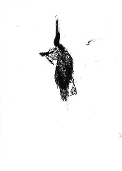 http://julienserve.com/files/gimgs/61_ofr-oiseau-59.jpg