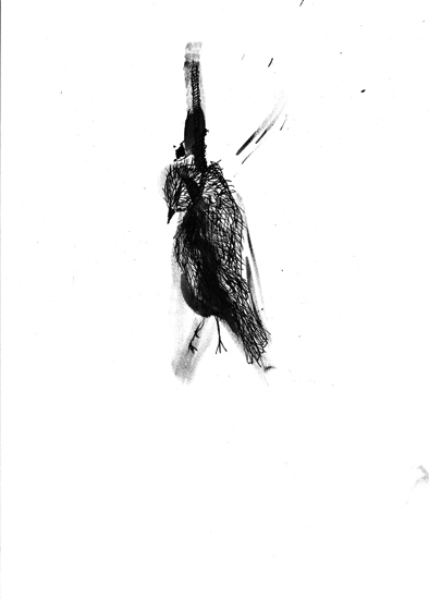 http://julienserve.com/files/gimgs/61_ofr-oiseau-61.jpg