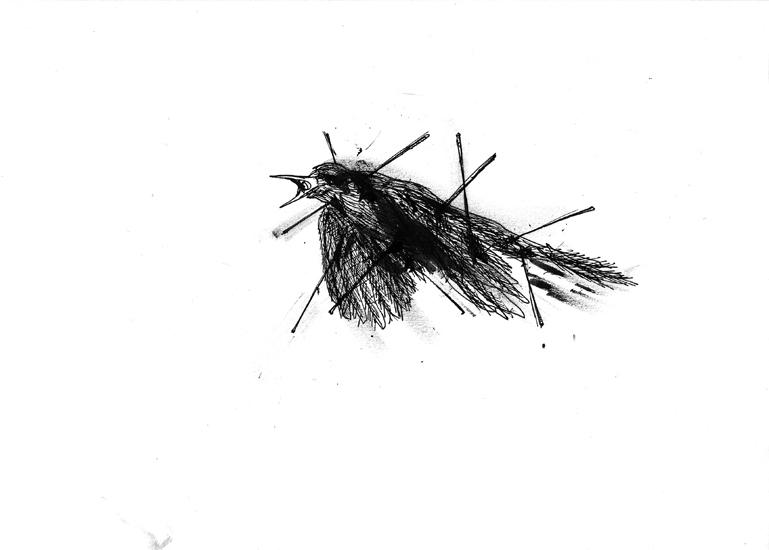 http://julienserve.com/files/gimgs/61_ofr-oiseau-7.jpg