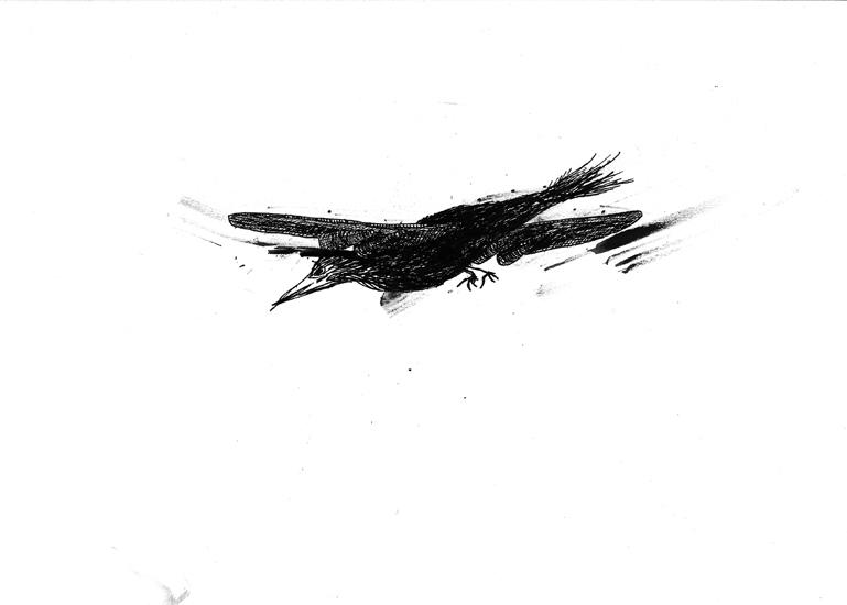 http://julienserve.com/files/gimgs/61_ofr-oiseau-8.jpg