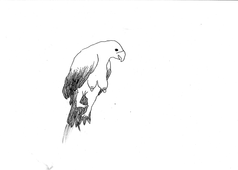http://julienserve.com/files/gimgs/61_ofr-oiseau-9.jpg
