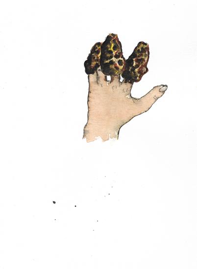 http://julienserve.com/files/gimgs/97_morchella-hand-2.jpg