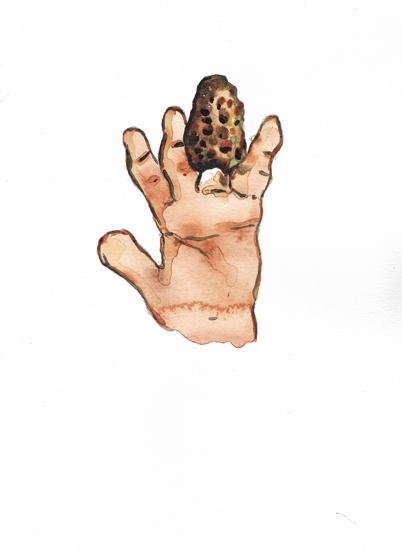 http://julienserve.com/files/gimgs/97_morchella-hand-3.jpg